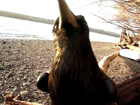 Bird Saying Good Boy Sounds So Creepy