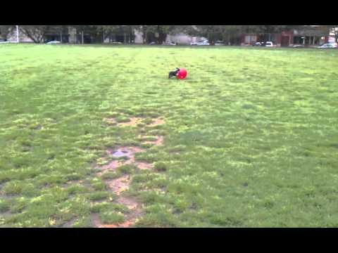 Jokes - Boston Terrier Does A Flip