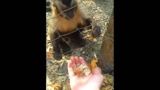 Monkey Gets Guy To Crush The Leaves
