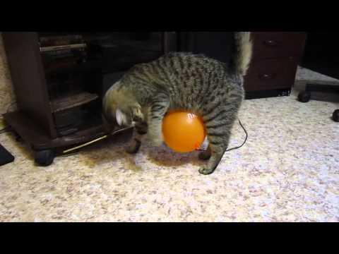 Funny Cat Vs The Static Balloon