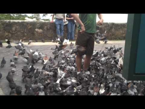 Jokes - Guy Tries To Feed The Pigeons