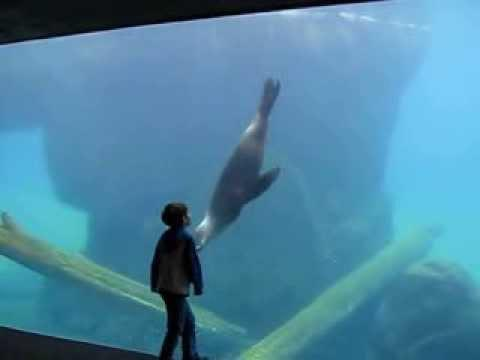Kid Plays With The Sea Lion At The National Zoo