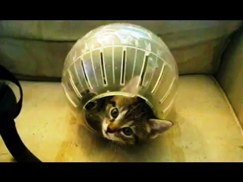 Compilation Of Cats And Hamster Balls