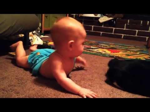 Baby Boy Vs Cat's Tail