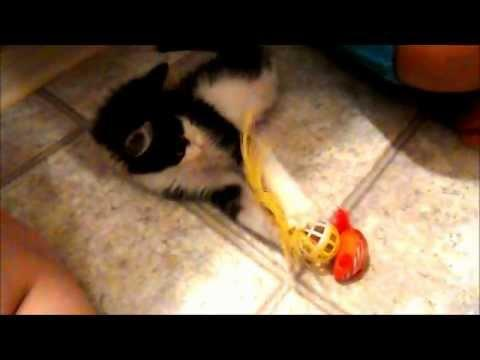 Cute - Kitten Playing With Toy