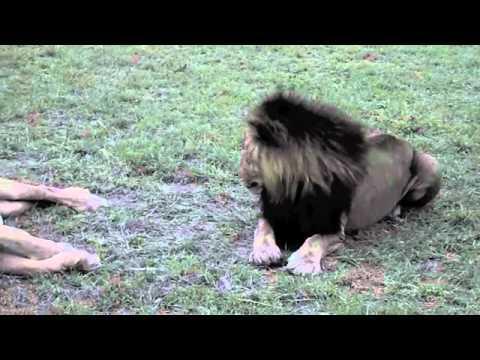 Jokes - King Of The Jungle Vs Fly