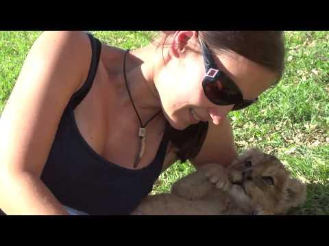 Girl Plays With Lion Cubs