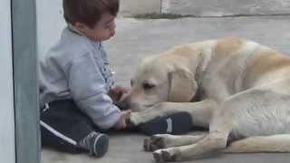 Friendship Between Kid With Down Syndrome And Dog