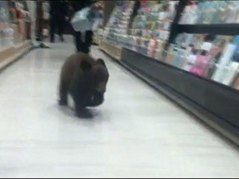 Why Did The Bear Cub Go Into The Drug Store