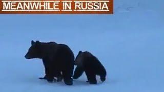 Russian Woman Yells At The Bears