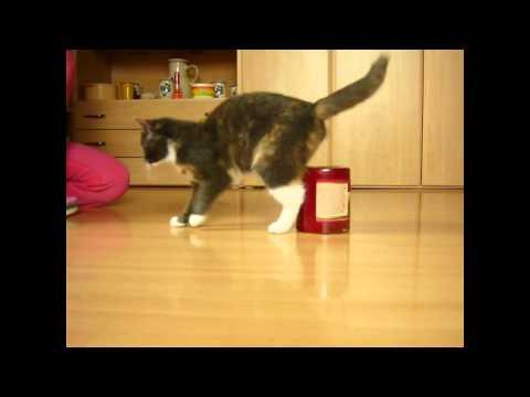 Cute - Cat Trains To Catch The Mouse