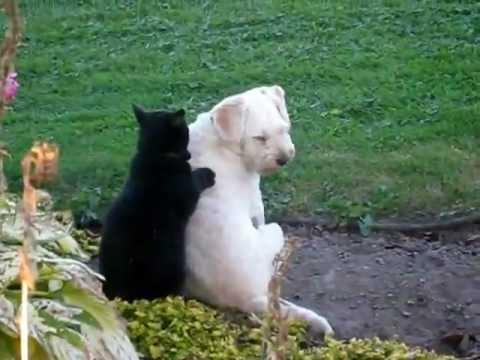 Cute - Dog Gets A Massage From Cat