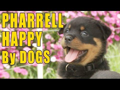 Pharrell Williams' Happy Song Dogs Edition