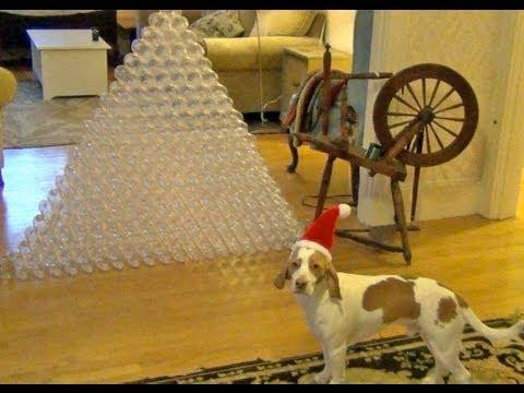 Cute - Dog Gets Bottles As Gift