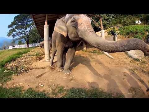 Amazing Animals Videos Shot Using GoPro From 2014