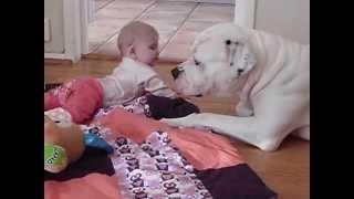 American Bulldog Babysits The Baby Girl