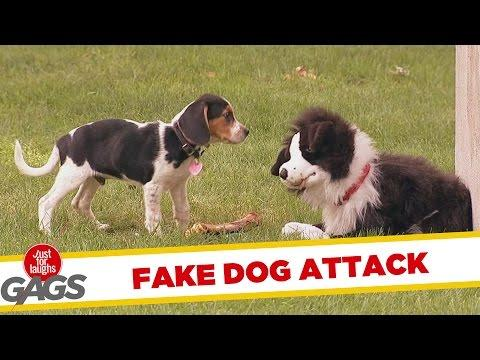 Dog Puppet With Bone Vs Dogs Prank