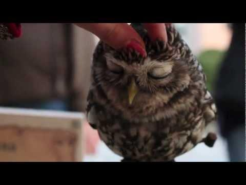 Cute - Bunch Of Owls Getting Petted