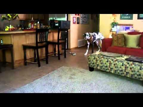 Jokes - Dogs Getting Scared