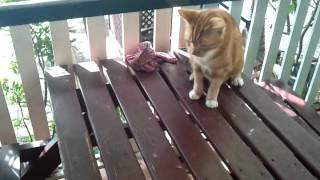 Cat Vs The Possum