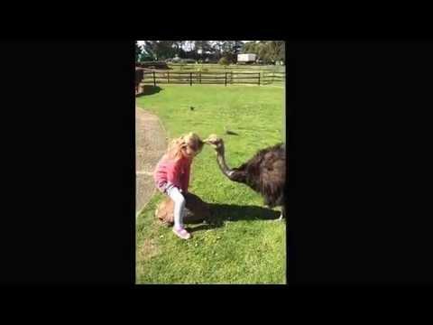 Little Girl Vs The Ostrich
