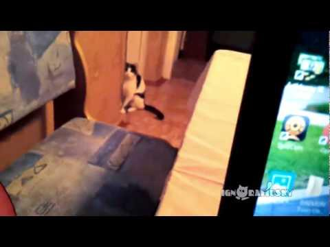 Cat Plays Peek-A-Boo Game