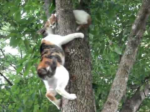 Mother Cat Tries To Rescue Her Baby Kitten