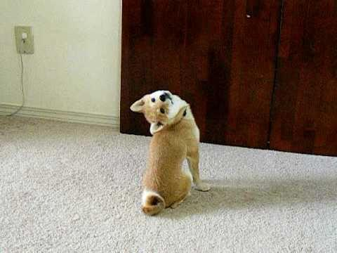 Jokes - This Dog Might Be An Owl