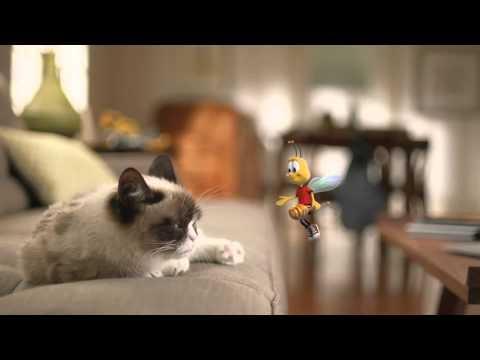 Grumpy Cat Vs Buzz The Bee