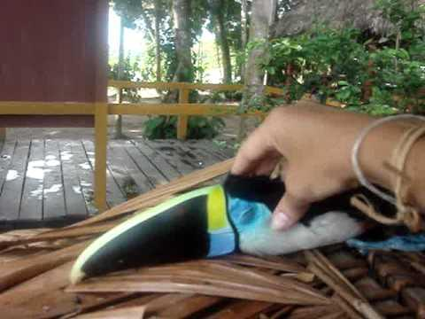 Cute - Toucan Enjoys A Head Massage