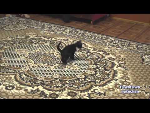 Jokes - Kitten Jumps On The Carpet