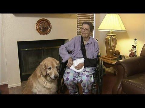 Golden Retrievers Save Woman's Life After Near Fatal Fall