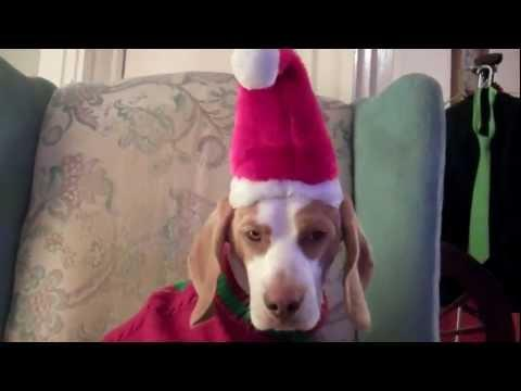 Jokes - Dog Doesn't Like The Christmas Costumes