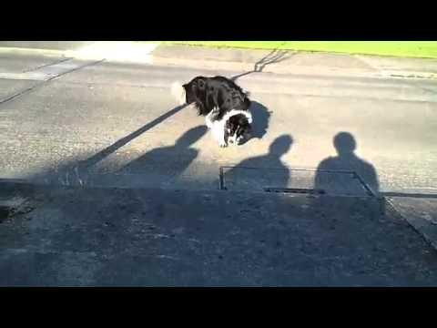 FAIL - Dog Fights With The Shadow