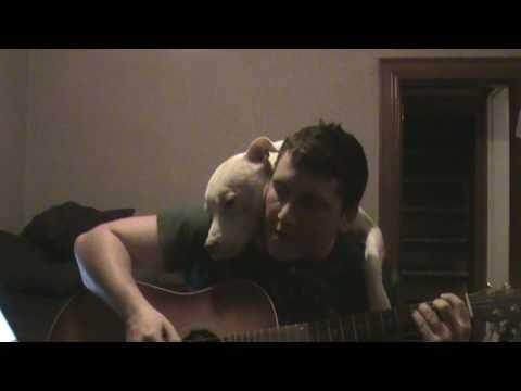 Guy Plays A Song For His Pit Bull