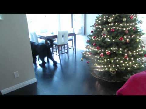 Cute Little Girl Plays Hide And Seek Game With Her Dog