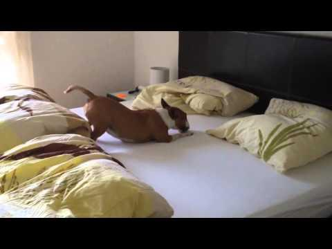 What Happens When The Owner Lets His Dog On His Bed