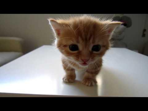 Cute - Kitten Cuteness Overload