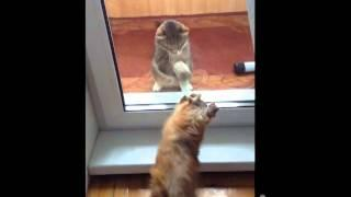Funny Cat Vs The Dog Fight