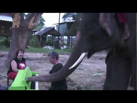 Cute - Elephant Tries To Play The Piano
