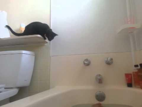 Cat In The Washroom Fail