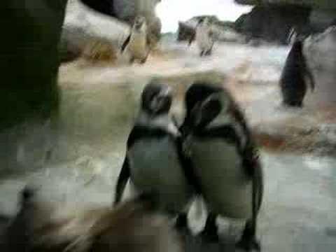 Cute - Penguins Watch A Dog