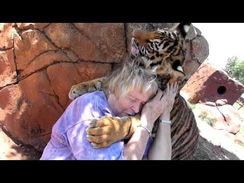 Cute - Tiger Cub Hugs The Woman
