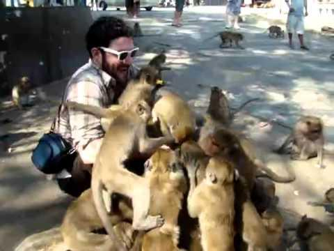 Jokes - Monkeys Swarm A Man To Get Treats