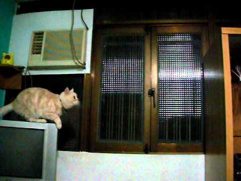 FAIL - Cat Fails To Jump
