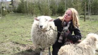 You're Not A Dog Sheep