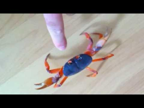 Don't Mess With The Land Crab
