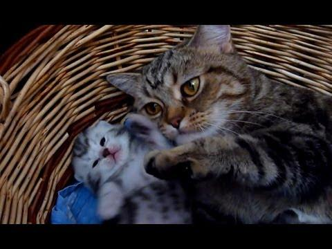 Cute - Mother Cat Gives Tips About Raising Kittens