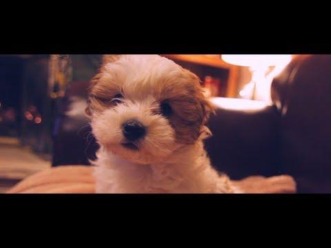Cute - Puppy Celebrates First Christmas