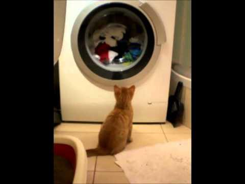 Jokes - Cat Fascinated By The Washing Machine